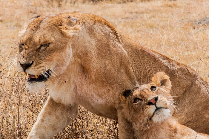 11 Ngorongoro