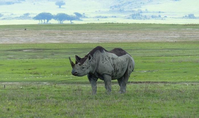 12 Ngorongoro