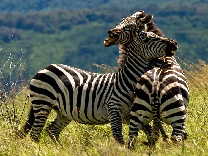 16 Ngorongoro