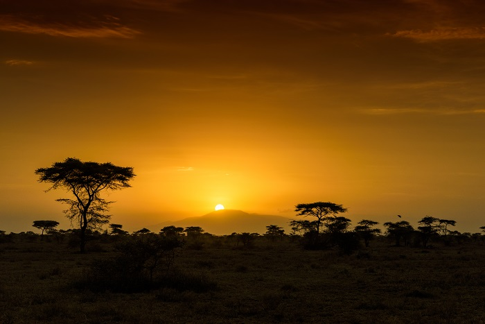 5 Ngorongoro