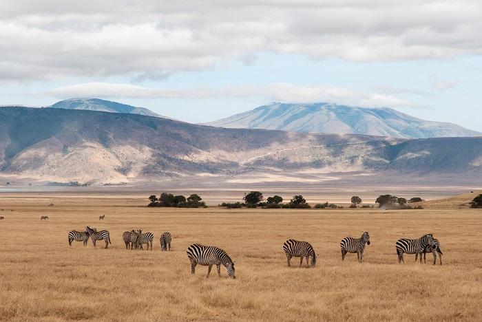 7 Ngorongoro