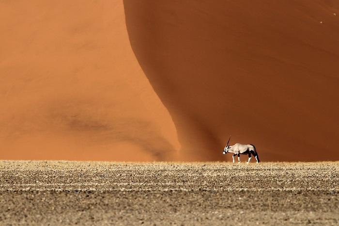 9 Namib Desert