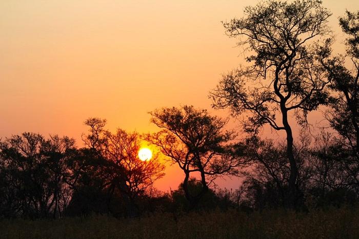 11 Okavango