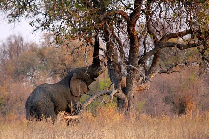 13 Okavango