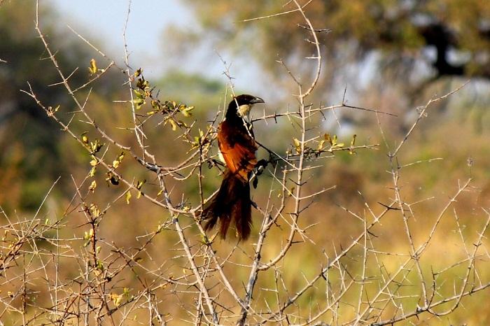 15 Okavango