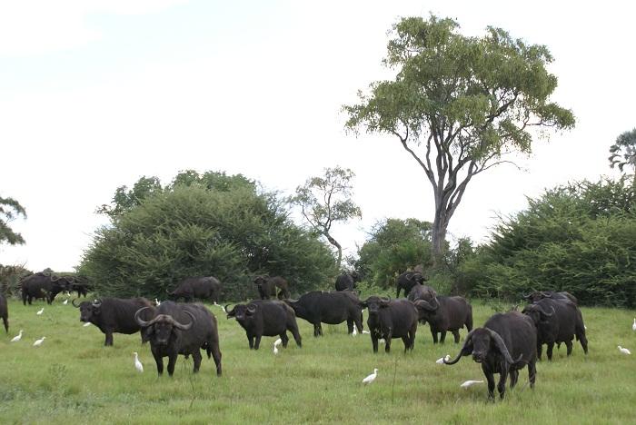 16 Okavango