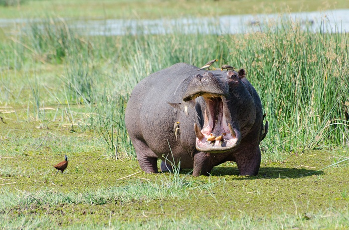 18 Okavango