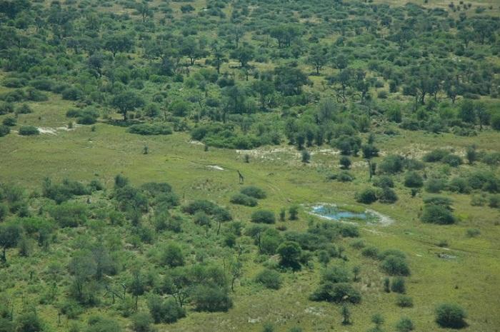 2 Okavango