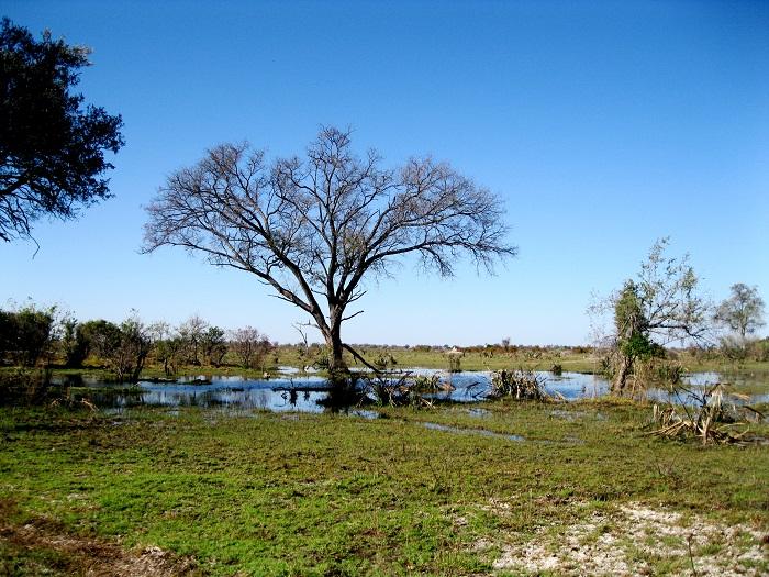 6 Okavango