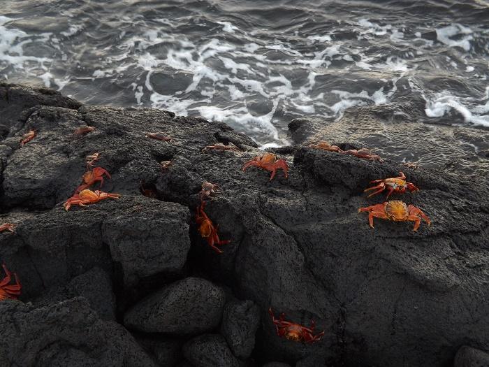 11 Galapagos