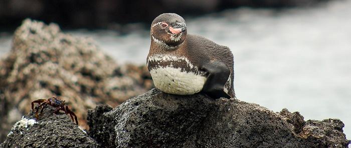 15 Galapagos