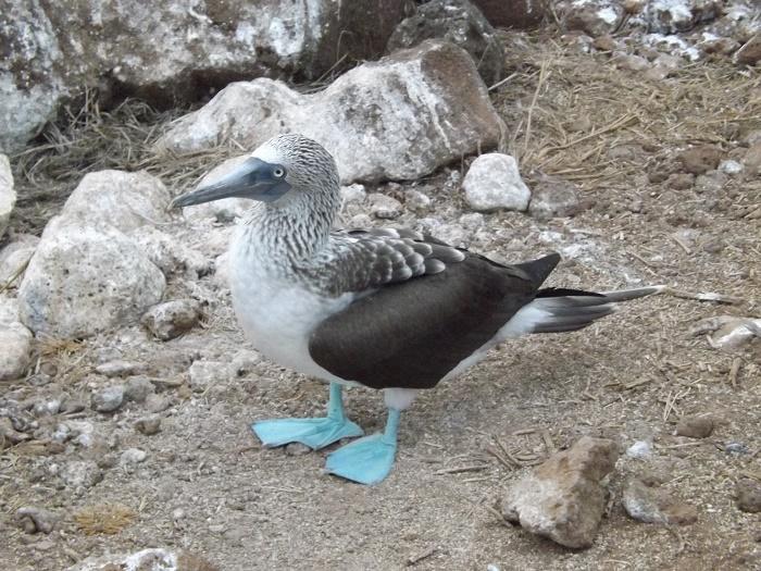 17 Galapagos