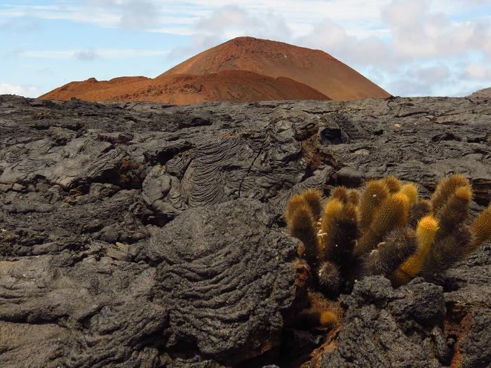 3 Galapagos