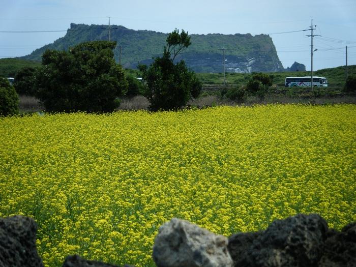 10 Jeju