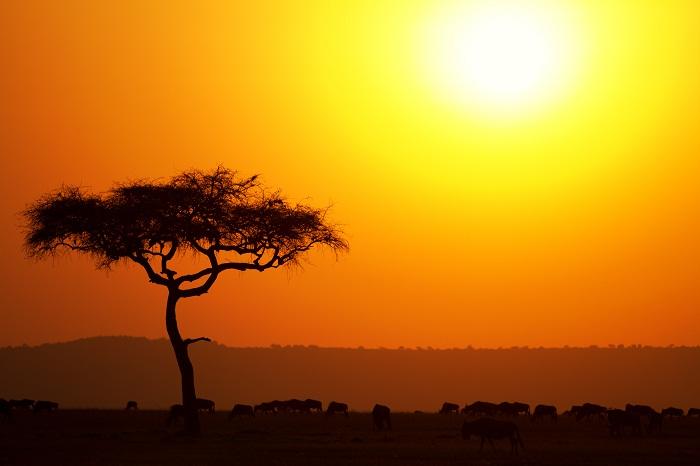 12 Maasai Mara
