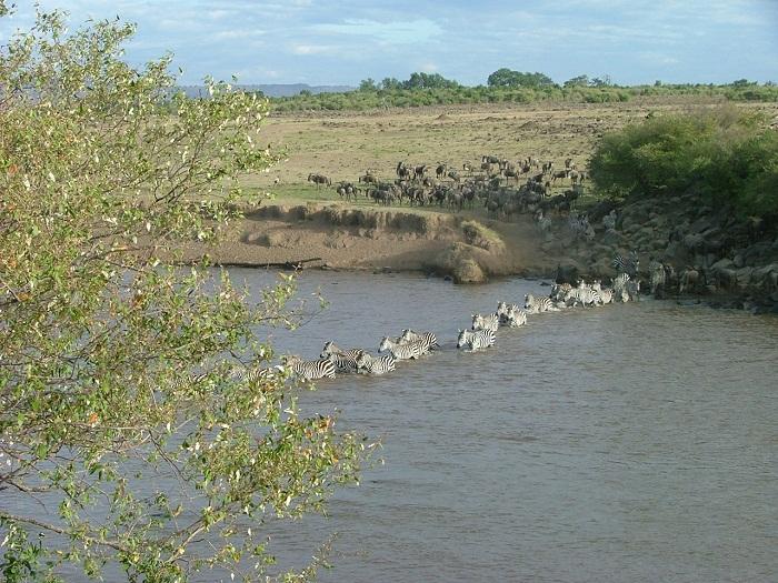 14 Maasai Mara