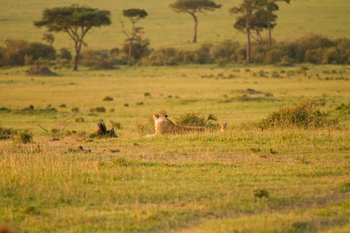 16 Maasai Mara