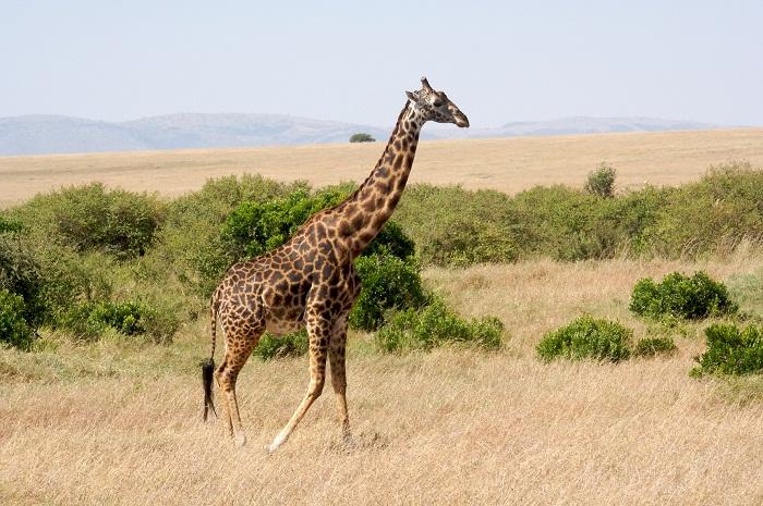 17 Maasai Mara