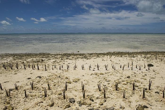 3 Tarawa