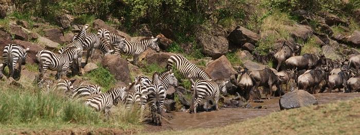 5 Maasai Mara