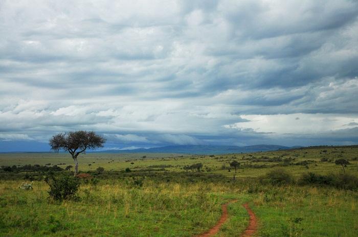 6 Maasai Mara