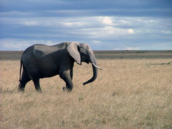 8 Maasai Mara