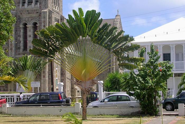 6 Bassterre Church