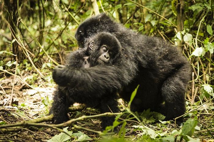 10 Virunga