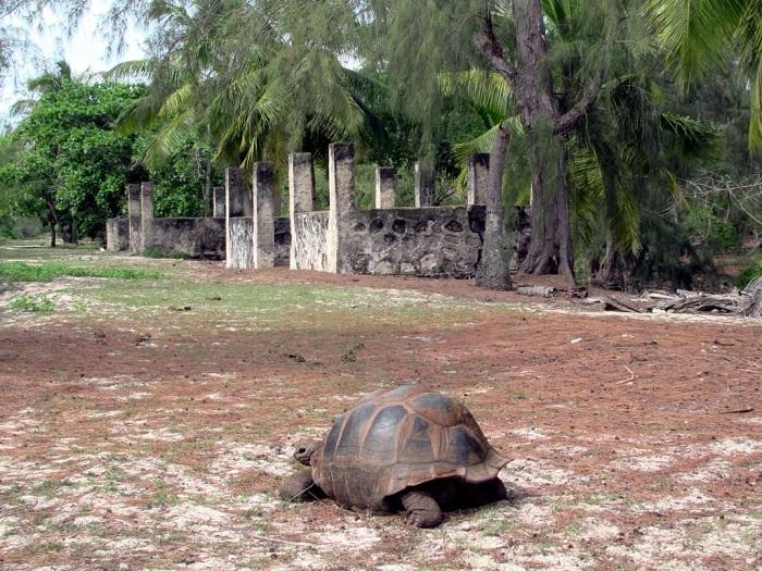 10 Aldabra