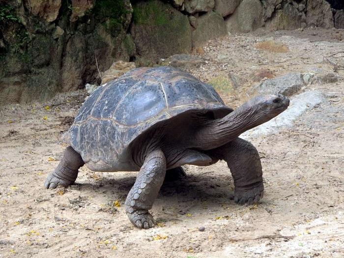 12 Aldabra