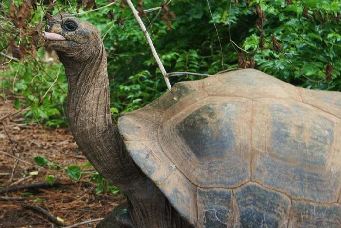 13 Aldabra