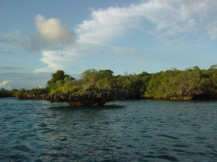 14 Aldabra
