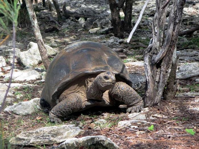 2 Aldabra