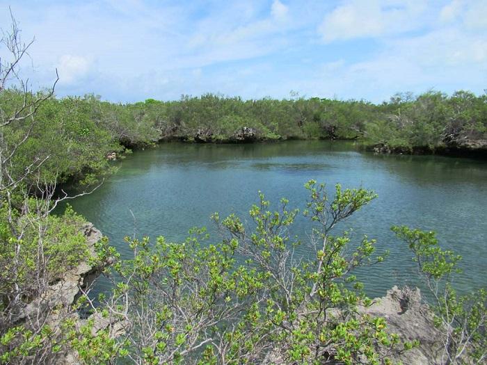 6 Aldabra