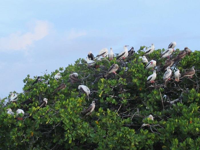 7 Aldabra