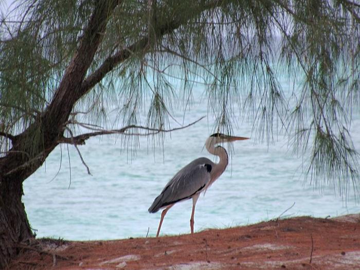 9 Aldabra