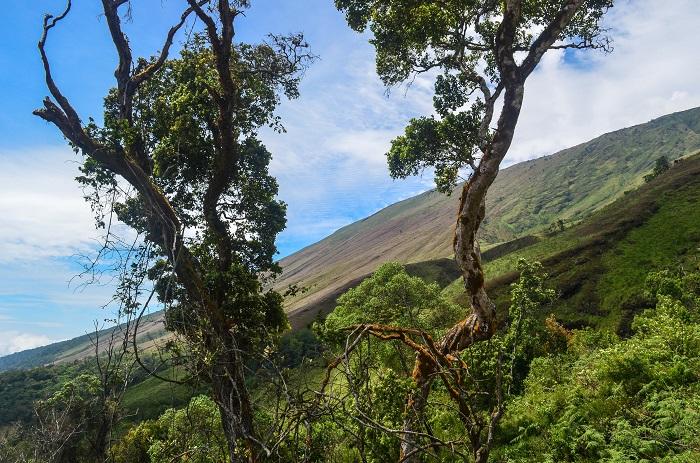 7 Mount Cameroon
