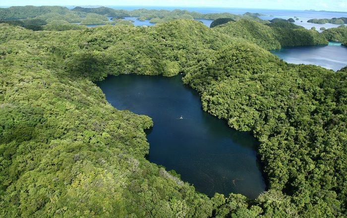 1 Jellyfish Lake
