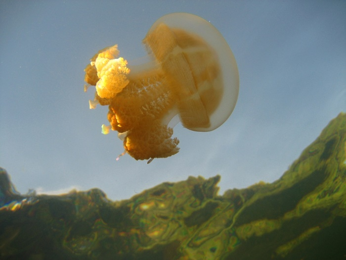 10 Jellyfish Lake