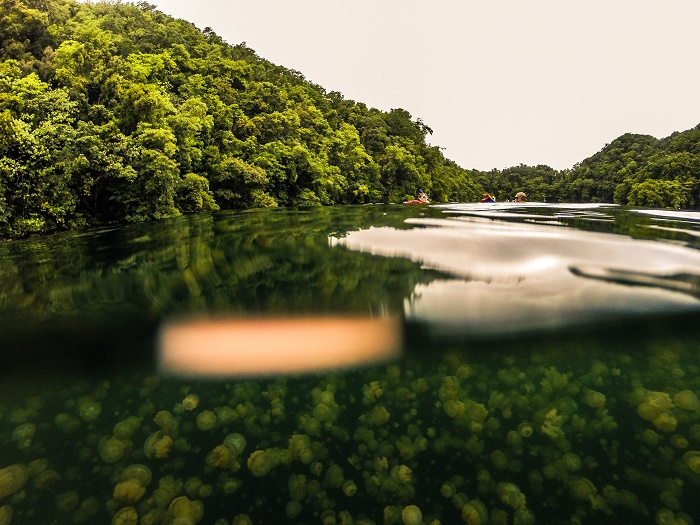4 Jellyfish Lake