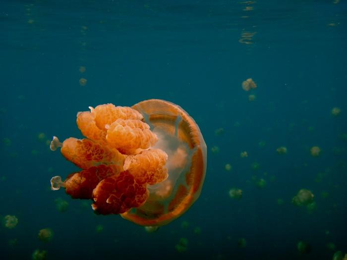 7 Jellyfish Lake