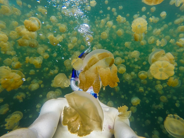 9 Jellyfish Lake