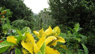 1 Bouma Fiji