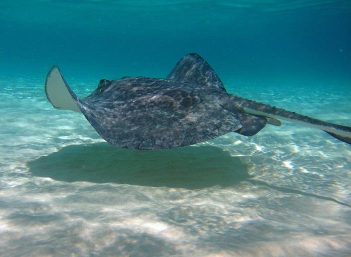 3 Stingray Cayman