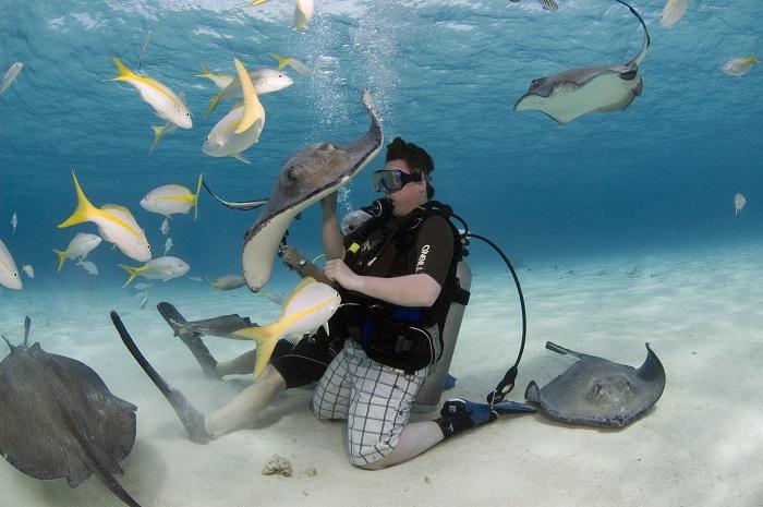 6 Stingray Cayman