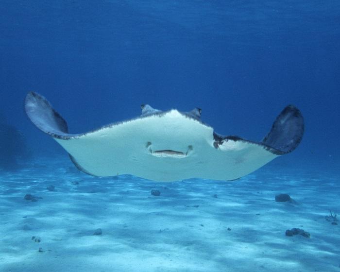 9 Stingray Cayman
