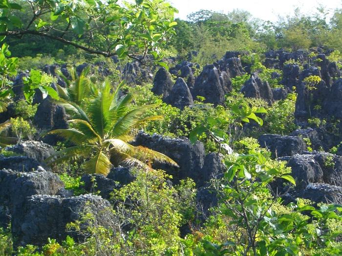 7 Nauru Mines