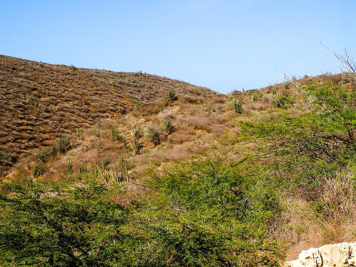 2 Jamanota Aruba