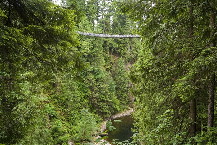 3 Capilano Bridge