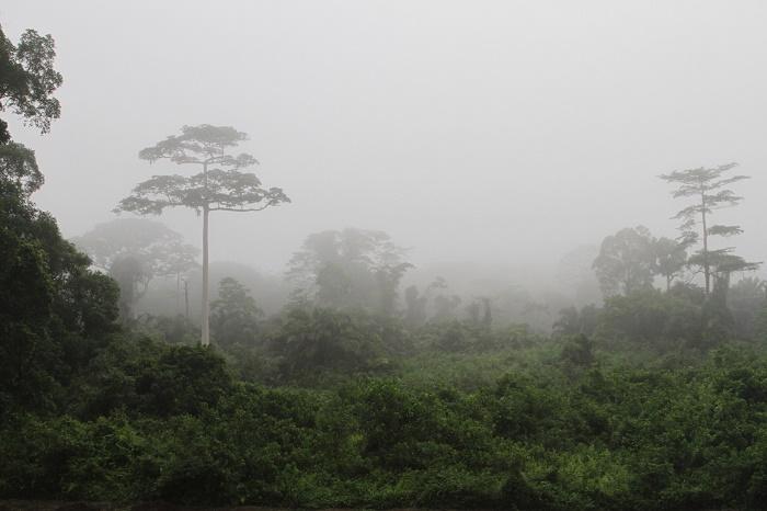 1 Tai Ivory Coast